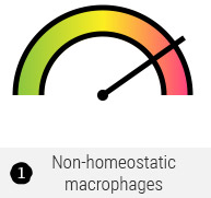 Non-homeostatic macrophages