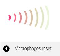 Macrophages reset