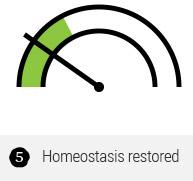 Homeostasis restored